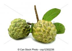 Sugar Apple clipart