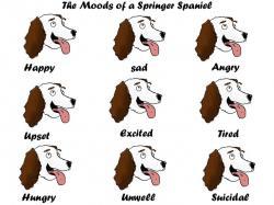 Springer Spaniel clipart brown white