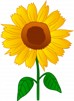 Triipy clipart sunflower