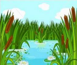 Swamp clipart