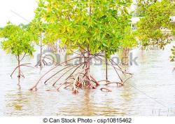 Mangrove clipart mangrove forest