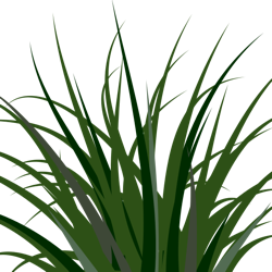 Moss clipart long grass