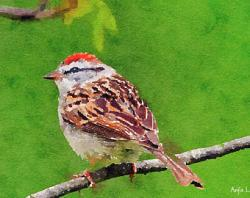 Swamp Sparrow clipart baby shower