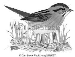Swamp Sparrow clipart black and white