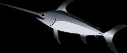 Swordfish clipart xiphias