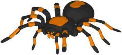 In The Desert clipart tarantula