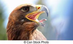 Tawny Eagle clipart eagle beak
