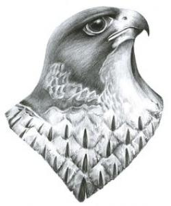 Drawn falcon falcon head