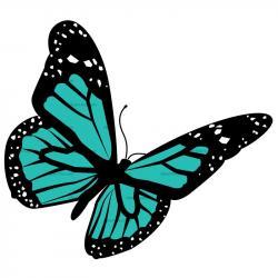Papillon clipart butterfy