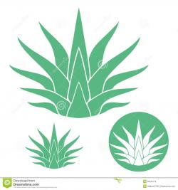 Tequila clipart agave
