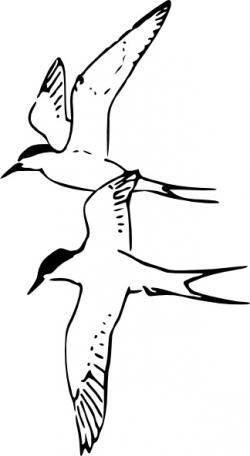 Tern clipart cute