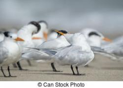 Tern clipart funny