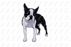 Boston Terrier clipart cartoon