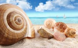 Wallpaper clipart shell