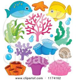 Anemone clipart cartoon