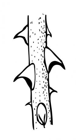 Thorns clipart