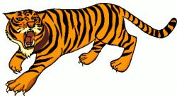 Tiiger clipart bengal tiger