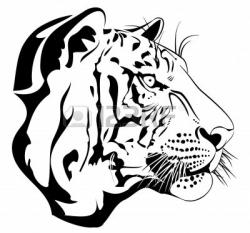 White Tiger clipart bengal tiger