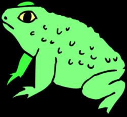 Bullfrog clipart toad