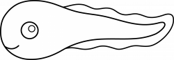 Tadpole clipart black and white