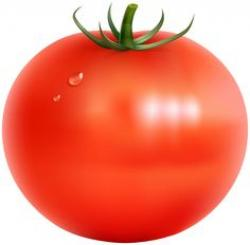 Tomato clipart bunch