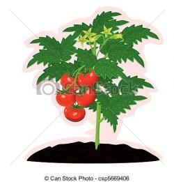 Tomato clipart bush