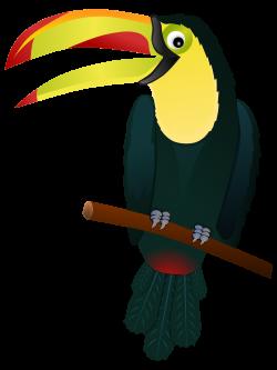 Hornbill clipart toucan