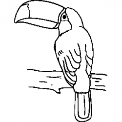 Toucanet clipart black and white