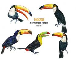 Toucanet clipart for kid
