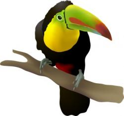 Toucanet clipart rainforest animal