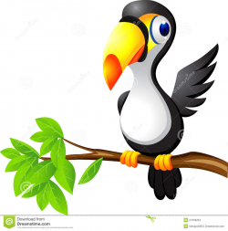 Toucan clipart for kid