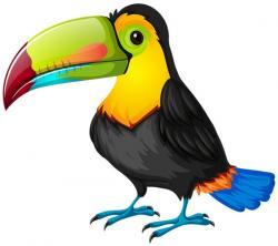 Hornbill clipart
