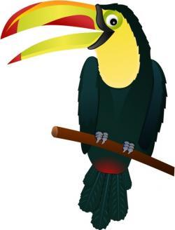 Toucan clipart vector