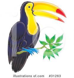 Toucan clipart vertebrate