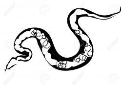 Boa Constrictor clipart python