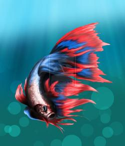 Betta clipart beta fish