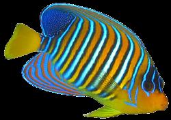 Butterflyfish clipart pretty fish