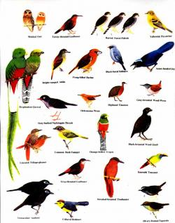 Costa Rica clipart Tropical Bird Clipart