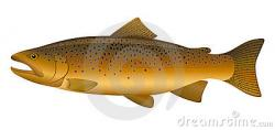 Trout clipart cute
