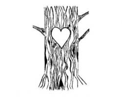 Bark clipart tree trunk