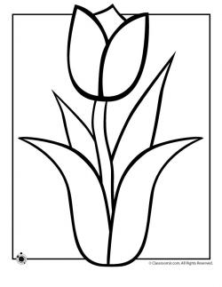 Drawn tulip spring flower