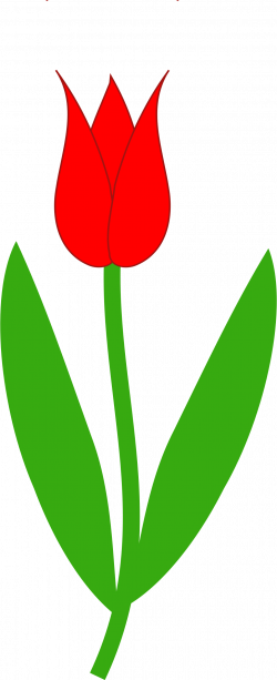 Drawn tulip red tulip