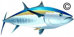 Fish Net clipart tuna fish