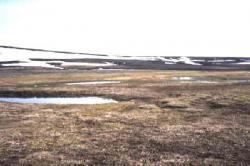 Tundra clipart barren