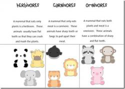 Herbivorous clipart animal classification