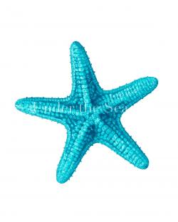 Starfish clipart turquoise