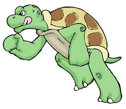 Slow clipart slow turtle