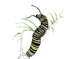Caterpillar clipart realistic
