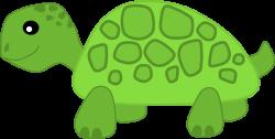 Herbivorous clipart green turtle