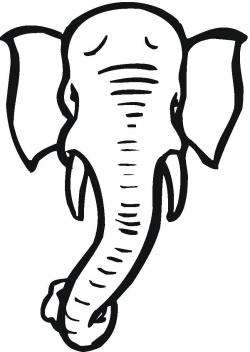Drawn elephant elephant tusk